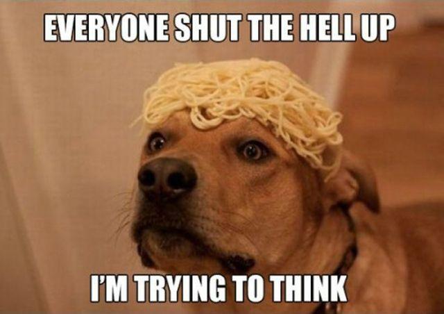 stoner-dog-10-dog-meme-21.jpg